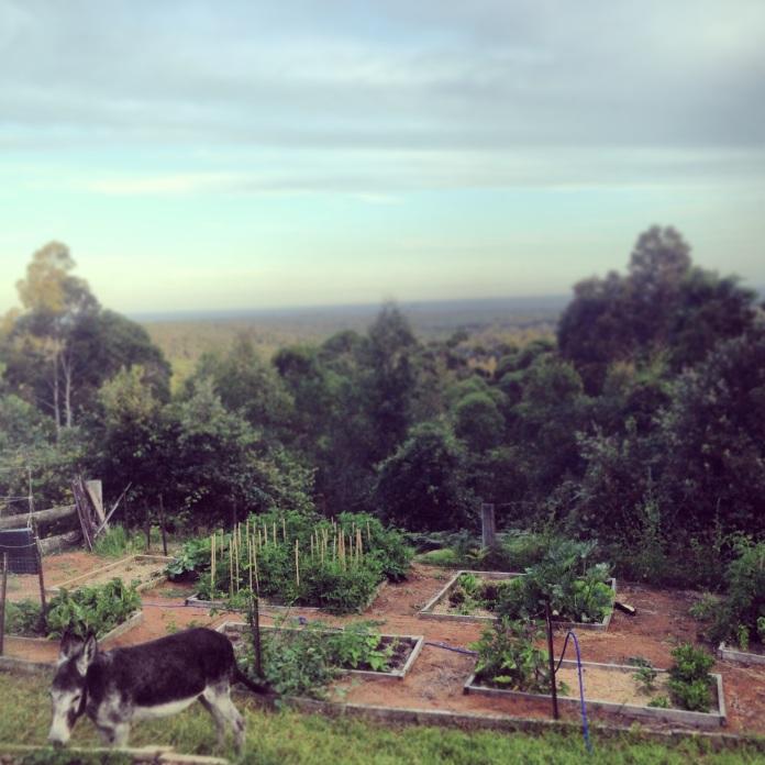 mindy garden